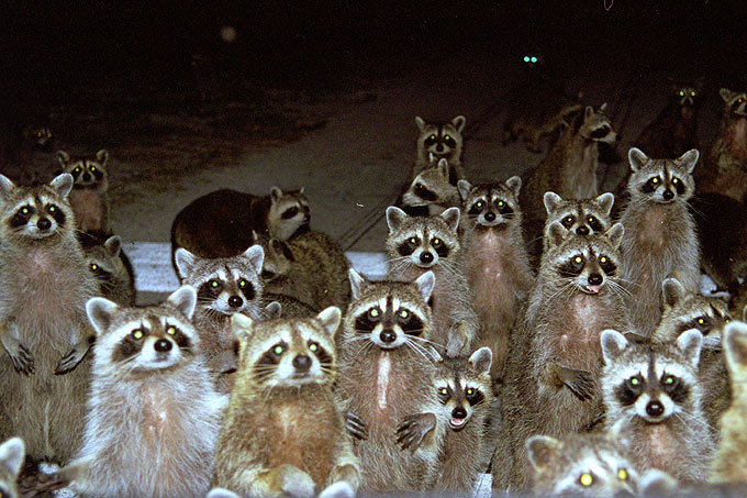 Top 10 Coons of2018